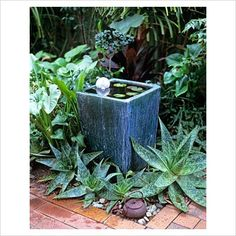 Love the combo of succulents and water features ~