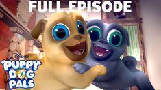 Hawaii Pug Oh A R F Full Episode Puppy Dog Pals Disney