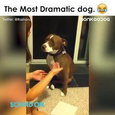 This is an Oscar Winning Performance - Funny Animals Funny Animal Jokes, Funny Animal Photos, Funny Dog Memes, Cute Animal Videos, Cute Animal Pictures, Really Funny Memes, Funny Animal Videos, Funny Animal Pictures, Funny Animal Sayings