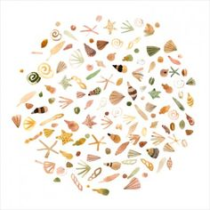 Peinture Aquarelle Coquillages, Déco Maison Bord de Mer, Marion Barraud #shells #art #illustration