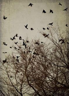 Flying Black Birds Art Print - photography