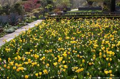Garden photographer, Saxon Holt, gives 6 tips on how to photograph gardens for a garden photography contest at Gardening Gone Wild Photography Contests, Photography Tips, Gardening Photography, Depth Of Field, Great Memories, Permaculture, Photo Contest, Tulips, Planters