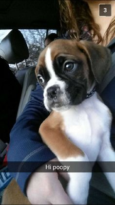 "Receive terrific suggestions on ""boxer pups"". They are readily available for you on our internet site. Boxer Dog Breed, Boxer Mom, Boxer And Baby, Baby Dogs, Pet Dogs, Doggies, Boxador Puppies, Dog Training, Training Tips"