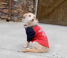 "Wonder Dog Apparel's ""Rescue, Foster, Adopt, Love"" tshirt, www.wonderdogapparel.com"