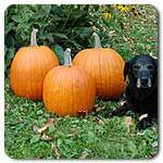 Organic Howden Pumpkin
