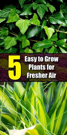 Excellent Veg garden tips are readily available on our web pages. Take a look an… – Garden İdeas Tea Garden, Plants, Indoor Garden, Veg Garden, Making Plant Pots, Growing Plants, Evergreen Plants, Perennial Herbs, Low Maintenance Plants