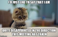 meetings with other cats