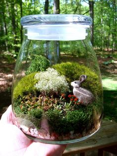 Extra Large VIBE JAR Terrarium Moss and Lichen by MossTerrariums