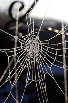 #icey #spiders #web