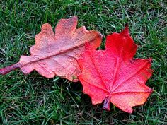 paper mache leaves for fall