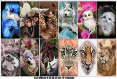 24 Domino Images  2 groups of 12  Perfect for your by SimplyDRave