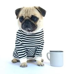 Pugs and ☕ Cute Baby Pugs, Cute Pug Pictures, Pugs And Kisses, Silly Dogs, Pug Puppies, Terrier Puppies, Boston Terrier, Cute Dogs Breeds, Pug Love
