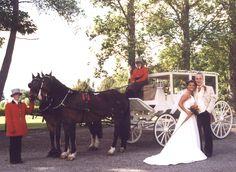 Cinderella Wedding Carriage | cinderella wedding carriage cinderella wedding carriage cinderella ... Pink Dress, Cinderella, Horses, Animals, Pink Sundress, Animales, Rose Pink Dress, Animaux, Pink Dresses