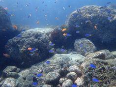 浅瀬のカラフルな魚たち。フリーダイバー武藤さんのコラムから