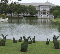 small topiary rabbits