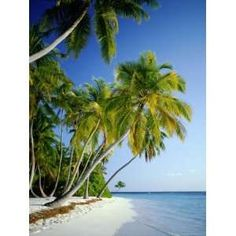 8 Best Palm Trees And Ocean Images Palm Trees Ocean