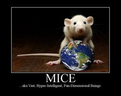 Mice are not, as is commonly assumed on Earth, small white squeaking animals who spend a lot of time being experimented on. In fact, they are the protrusions into our dimension of hyper-intellegent pan-dimensional beings. These beings are in fact responsible for the creation of the Earth.  Two mice (Frankie and Benjy) escaped from Earth before the premature termination of its programme. They had belonged to an Earthling known as Trillian. They were rather keen to remove Arthur Dent's brain…