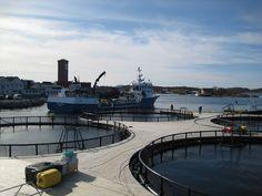 #Norway #Vitamar A.S. To #Invest #FDI US$24 Million in #MarineAquaculture in #PreahSihanouk #Cambodia https://adalidda.net/posts/5bLLAceEyLWFv3xDA/norway-vitamar-a-s-to-invest-ususd24-million-in-marine