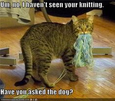 Um no, I haven't seen your knitting. Have you asked the dog?