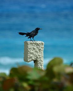 Cancun bird