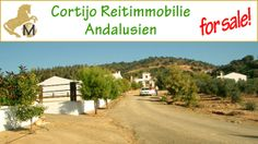 for sale: studfarm, finca, horse-and countryproperty, Andalusia, Sevilla, Villamartin  – INFO http://www.country-properties-worldwide.com/property/view/cortijo-mit-pferdest-llen-in-andalusien-zu-verkaufen-en-GB?#ad-image-0  – or contact us by email info@mara-lisa.com   - all listed properties you can see on our website – (http://www.country-properties-worldwide.com/)