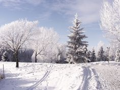 Park in the winter Wallpaper Winter Nature Wallpapers) – Wallpapers Winter Wonderland Pictures, Winter Wonderland Wallpaper, Winter Wallpaper Hd, Winter Szenen, Winter Magic, Winter Trees, Winter White, Winter Christmas, Wallpaper Pictures