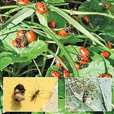 Natural methods to get rid of spiders