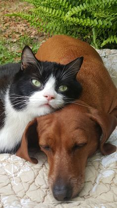 Abandoned Dog And Paralyzed Cat Survived Because They Had Each Other