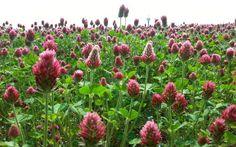 Naplánujte si program zeleného hnojení zeleninových záhonků