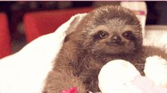 This sloth that bought you flowers just because he knew they'd brighten your day: