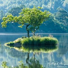 The Tree - Rydal Water, Lake District, UK. by Daniel Kay on Secret Places, Photos Of The Week, Lake District, Wonderful Places, Landscape Photography, Travel Photography, Outdoor Spaces, Places To See, Mists