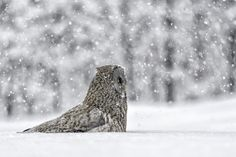 Pausing winter... by Daniel Parent on 500px
