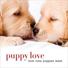 Sterling Publishing - Puppy Love How Cute Puppies Meet