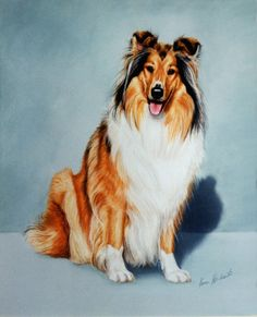 Collie drawing.