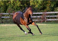 Thoroughbred   Training a Thoroughbred 8 Most Popular Horse Racing Events ...