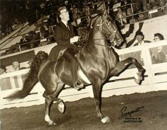 Six time, Five Gaited WGC CH My-My.  Even though she was a mare, this horse was a powerhouse with a huge motor to rival even Skywatch.