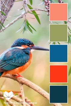 Pantone Color of the Year Classic Blue Color Palettes, Kingfisher Bird 10 color palettes! Classic Blue in Kingfisher burd with bright orange, peach, blue, and dark teal. Pantone Colour Palettes, Color Schemes Colour Palettes, Orange Color Palettes, Nature Color Palette, Blue Colour Palette, Pantone Color, Bright Color Schemes, Color Blue, Design Blog