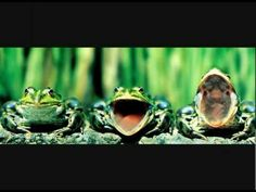 pictures of funny frogs Frog Wallpaper, Photo Timeline, Fb Banner, Funny Frogs, Fb Cover Photos, Twitter Cover, Facebook Timeline Covers, Facebook Humor, Frog And Toad