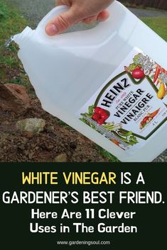Vinegar Is A Gardener's Best Friend. Here Are 11 Clever Uses in The Garden Vinegar can simultaneously enhance the life of a plant and kill weeds.Vinegar can simultaneously enhance the life of a plant and kill weeds. Garden Yard Ideas, Lawn And Garden, Garden Landscaping, Garden Projects, Landscaping Design, Garden Tools, Garden Leave, Garden Insects, Garden Weeds