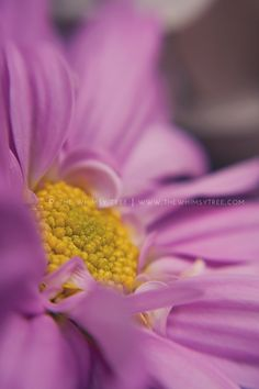 Gorgeous macro floral! #seeinanewway #lensbaby
