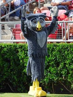 Rice University Owls mascot - Sammy the Owl Sports Advertising, Owl Logo, Rice University, Live Animals, Image Search, Photo Galleries, Owls, Bird, Sports Games