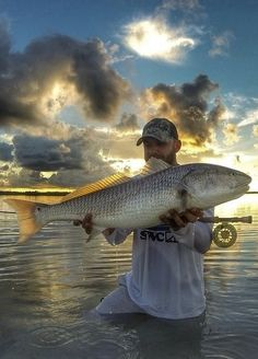 Wish I was fishing for Redfish right now! Redfish by Skinny Water Culture.