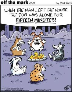 Campfire stories for dogs sounds really scary! Campfire stories for dogs sounds really scary! Dog Quotes Funny, Funny Dogs, Funny Animals, Cute Animals, Hilarious Sayings, Funny Kitties, Funny Memes, Funny Horses, 9gag Funny
