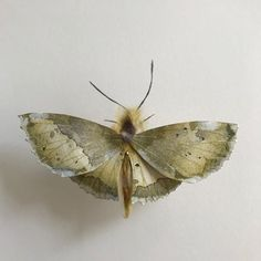 Lesley Kendall (@rustlingleaf) • Instagram photos and videos Red Cross, Art Auction, How To Raise Money, Moth, Photo And Video, Paper, Nature Inspired, Kendall, Butterflies