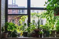 Urban Garden Design 4 Tips for Setting Up a Windowsill Garden - Modern Farmer - Act now to ensure you have fresh supply of basil, mint and more until spring. Plants On Window Sill, Hanging Plants, Indoor Plants, Potted Plants, Jardin Luxuriant, Smart Garden, Garden Modern, Modern Farmer, Garden Windows