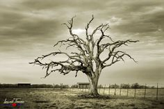 A bleak winter sky accentuates the stark frame of a long dead tree between Luling and Gonzales. Photographic Prints: Photographic prints are available in three finishes – mat… Leaf Photography, Beautiful Landscape Photography, Beautiful Landscapes, Winter Sky, Winter Trees, Dead Tree Tattoo, Drawing Scenery, Lone Tree, Photography Tutorials