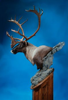caribou-Dewey Wildlife Studio