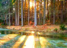 Pond with Sun Rays