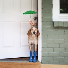 Maddie is all ready for the spring rain 💫//maddie the coonhound I Love Dogs, Puppy Love, Cute Dogs, Funny Dogs, Funny Animals, Cute Animals, Poodle, Mundo Animal, Mans Best Friend