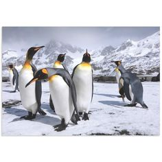 Steph Oli 'King Penguins at the Bay' Penguin Wall Art on Metal or Acrylic